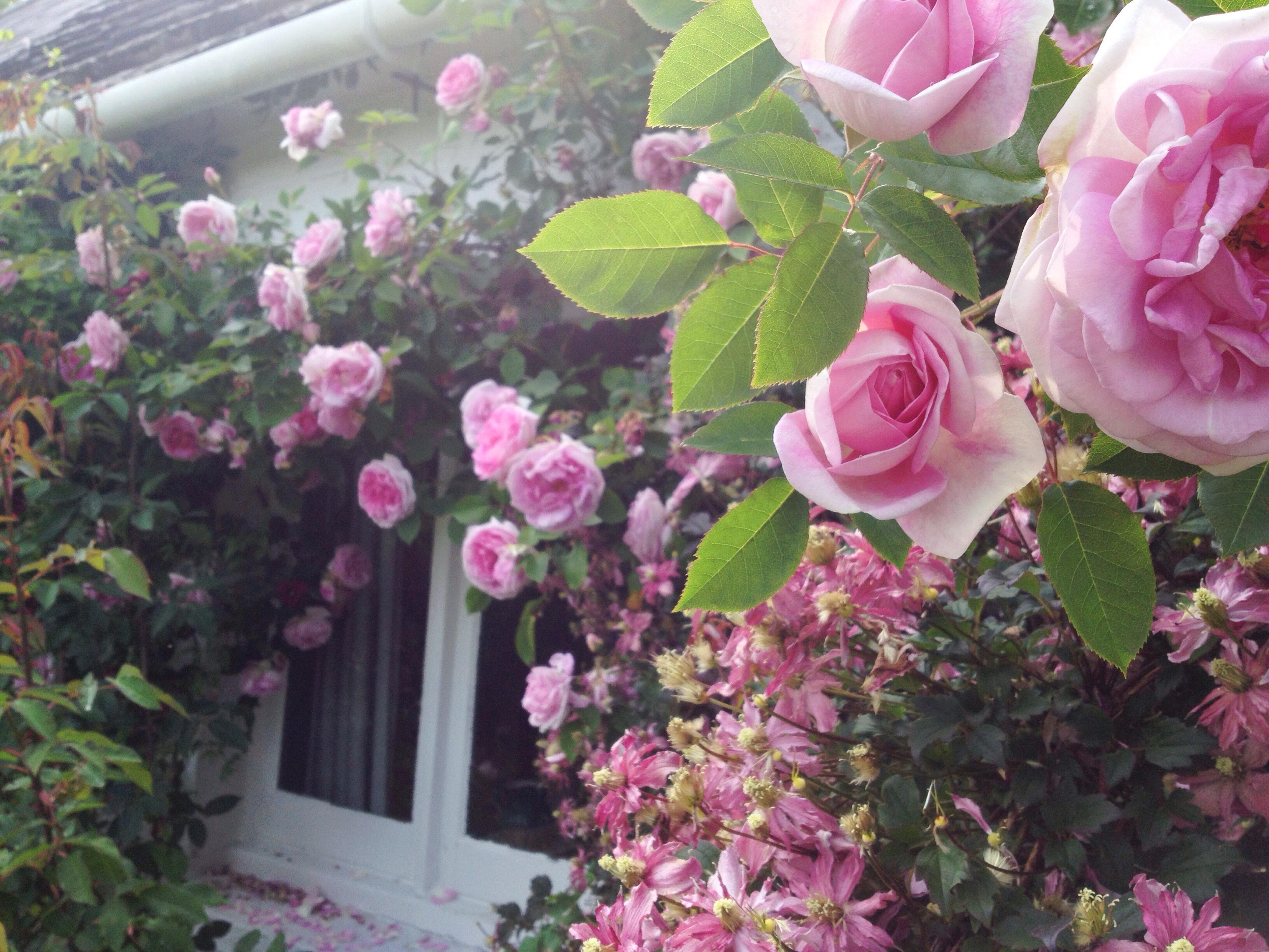 Maison Au Fond Du Jardin Construire Une Jolie Cabane De Jardin